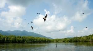 eylizar- langkawi mangrove tour